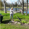 Student Volunteer Raking